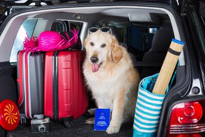 Urlaub mit dem Hund im Hunsrück